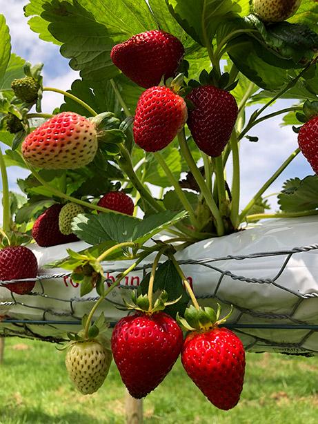 Fresh Produce | Macca's Farm - South Gippsland's Local